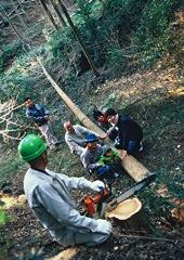 大黒柱伐採、生涯の記憶に残ります。