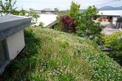 屋上緑化は浜松スタイル